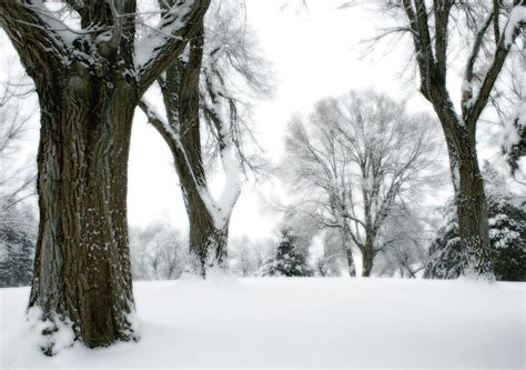 How to prepare and protect your trees for cold weather and snow.