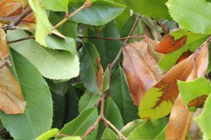 Dry leaves Heatwave