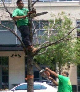Bad Tree Surgeons