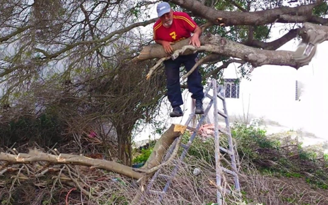 How To Avoid A Bad Tree Surgeon
