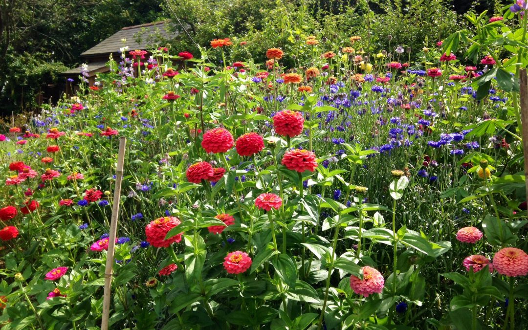 YOUR GARDEN IN SEPTEMBER – GARDENING TIPS